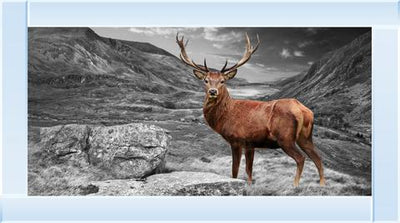 Antler Stag 115 x 65 Artwork