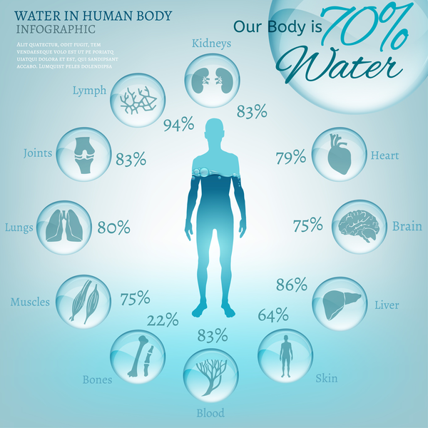 infographic on water composition of body