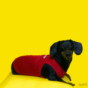 PAPELÓN PET SHIRT