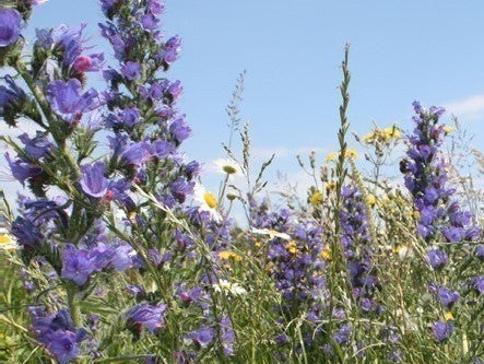 Wildflower Seeds Bee & Butterfly Enriched Mix - 20%