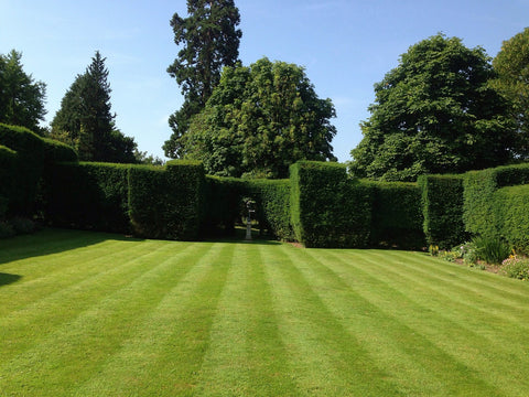 Castle Lawn - Low mow