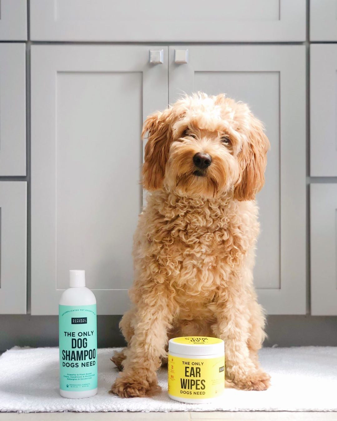 Clean dog with dog shampoo and ear wipes by Natural Rapport - Photo Credit @mochiwilbur