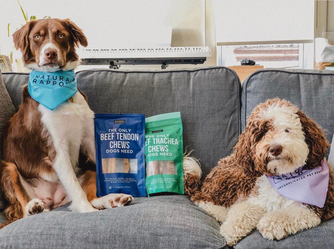 Dogs with Natural Rapport Beef Tendon Chews and Beef Trachea Chews for Dogs - Photo Credit @ piperhikes