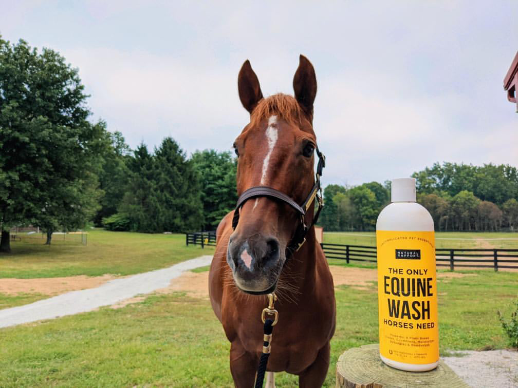 Clean horse with Natural Rapports Equine Wash / Horse Shampoo - Photo Credit @talkingaboutred