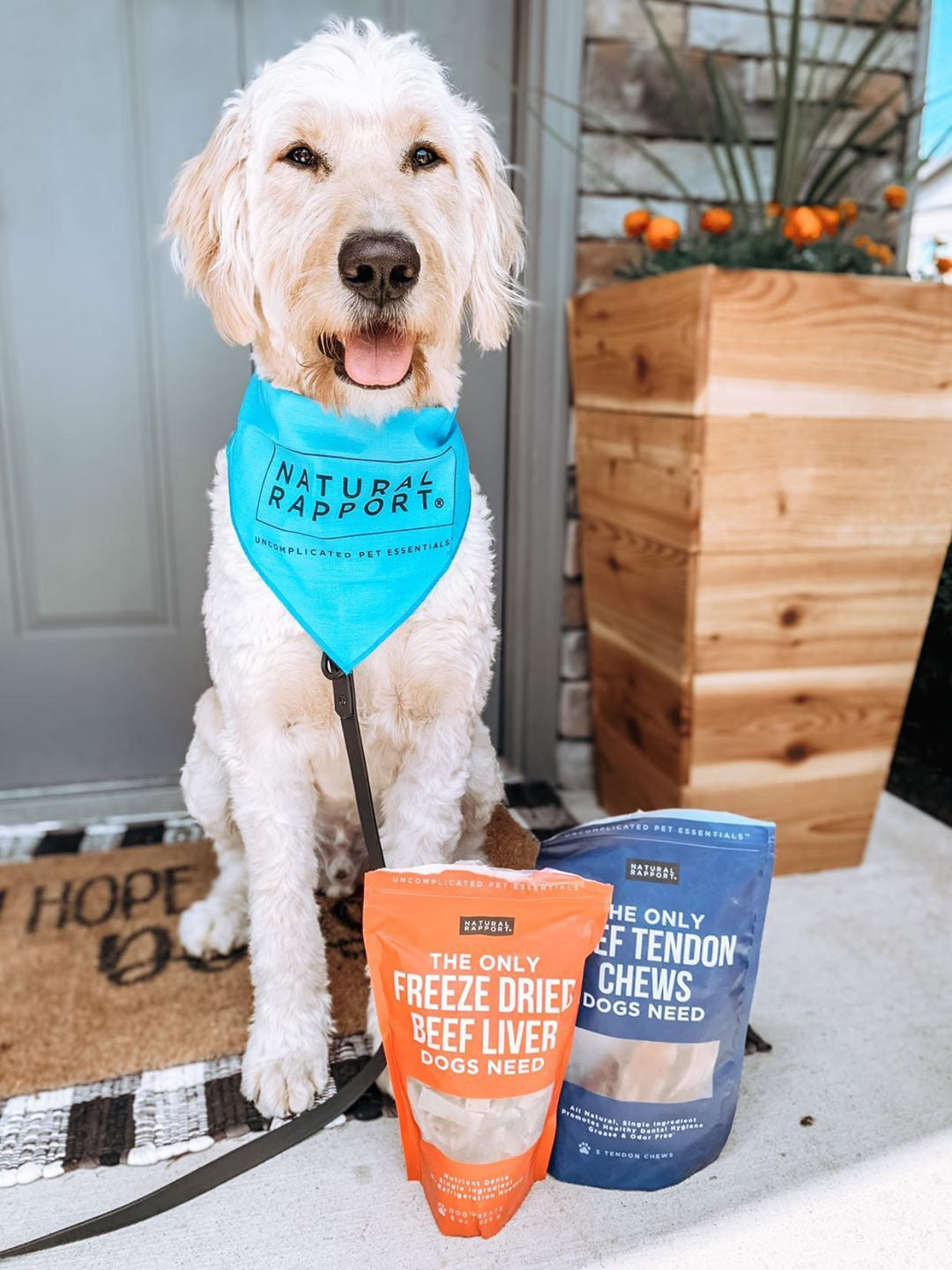 Doodle with Natural Rapport dog products - Photo Credit @thatdoodlemurph