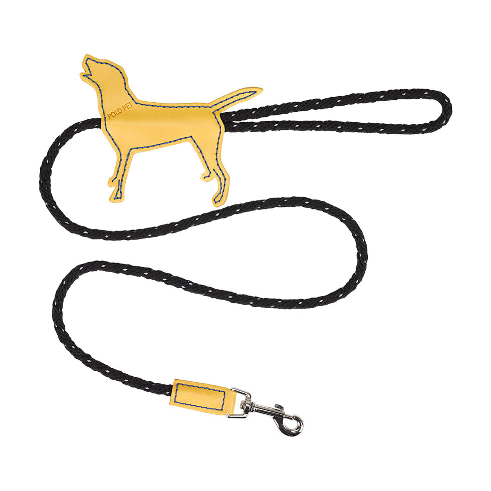 Labrador Black X Yellow X  Royal blue leash