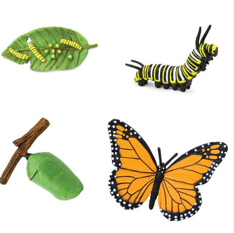 Safari LTD Lifecycle of a Monarch Butterfly