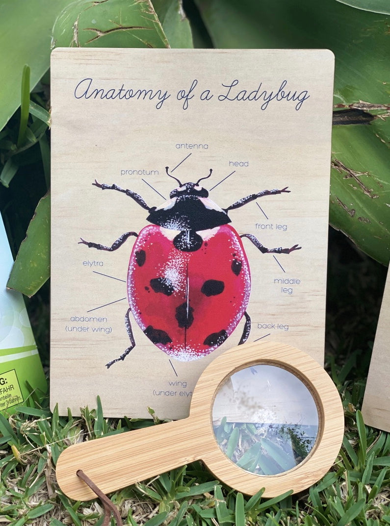 Anatomy of a Lady Beetle Board- Ataahua Children