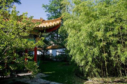 How To Choose The Ultimate Bamboo Plants For Privacy · Bamboo ...