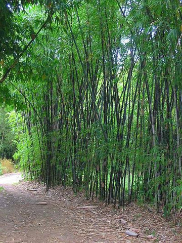 black bamboo privacy screen