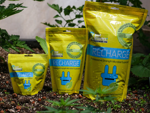 Picture of Recharge Soil Conditioner for Bamboo