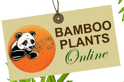 Bamboo Plants Online