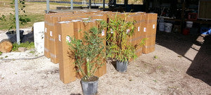 See The Plants We Ship