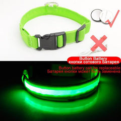 USB Charging Led Dog Collar Anti-Lost/Avoid