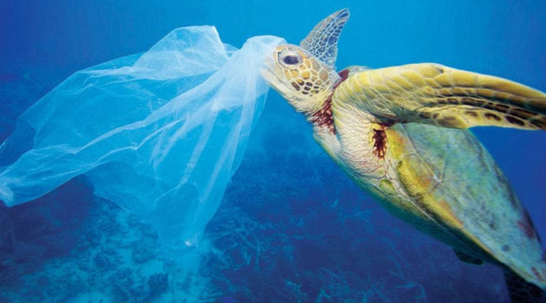 The Environmental Impact of Reusable Grocery Bags