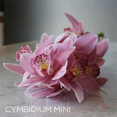 Cymbidium Orchid Stem - Large