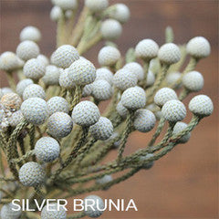 Brunia Berry