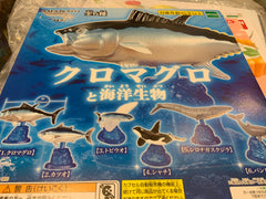 Marine Life Fish Collection Figure 6 Pieces Set (In-stock)