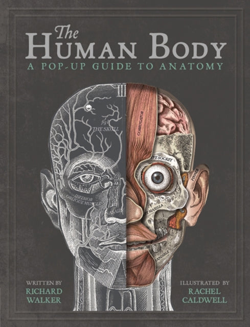 The Human Body : A Pop-Up Guide to Anatomy-9781787410589