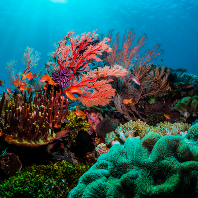 What are corals and how does sunscreen affect them?
