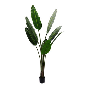 Strelitzia Artificial Tree -150cm