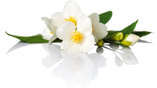 jasmine essential oil for organic creams and lotions