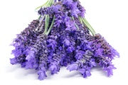 Cream ingredient lavender