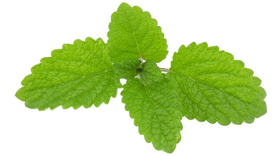 lemon balm essential oil benefits for skin