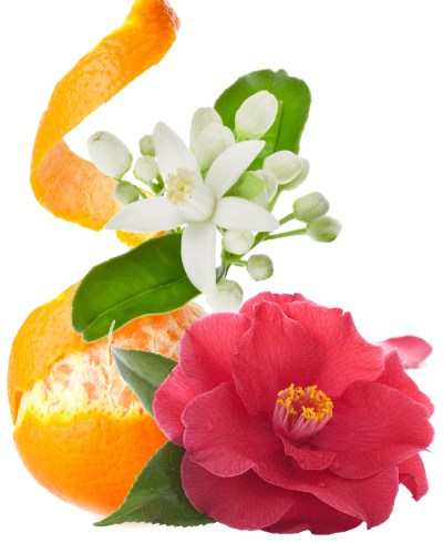 neroli orange and rose essential oils remove wrinkles and fine lines