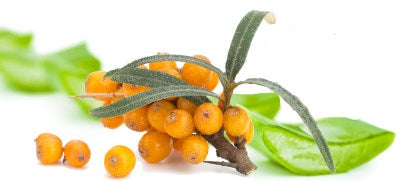 aloe and seabuckthorn