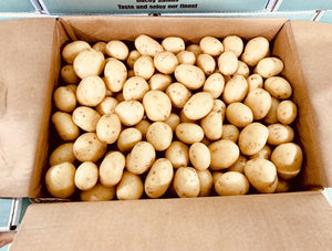POTATO BABY [x10kg] BOX - Jackie Leonards