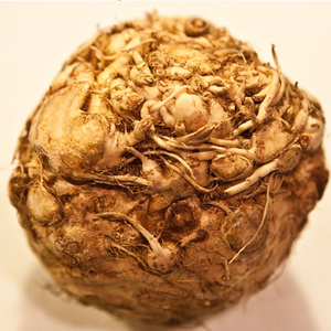 CELERIAC WHOLE HEAD - Jackie Leonards