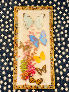 Vintage Butterfly Taxidermy from Brazil