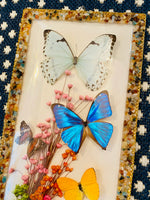 Load image into Gallery viewer, Vintage Butterfly Taxidermy from Brazil