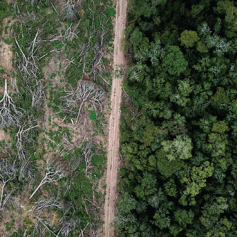 Deforestation happens all over the world to make room for farming, new home construction and commercial development, this is a picture of a forest that is cleared to grow soybeans