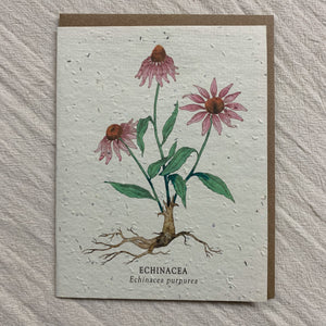 Seed Cards from The Bower Studio