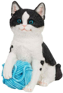 Best Of Breed Black And White Cat With Wool
