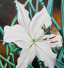 Load image into Gallery viewer, White Lily Geoff Slater