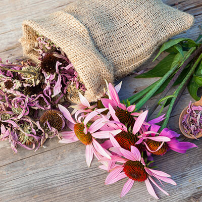 Top 5 Foods to Boost Immunity Echinacea