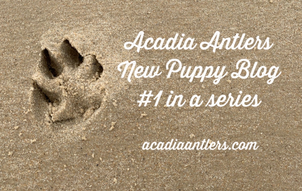 New Chewer Puppy Blog Helpful Tips and Tricks