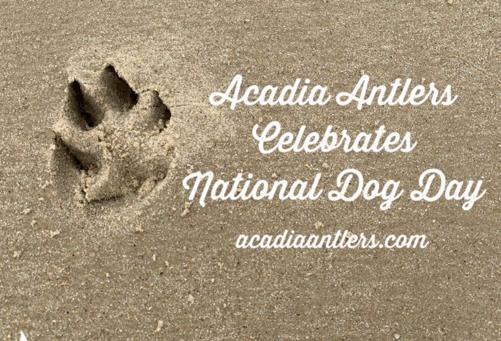 National Dog Day 2020 Special Offer on Acadia Antlers The Best Antlers For Your Dog