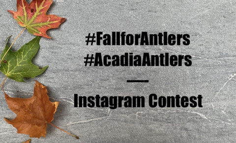 Acadia Antlers GIVEAWAY and Fall Dog Tips Fun Pumpkin Leaves Play Puppy