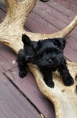 Acadia Antlers Tips on Caring For Puppies
