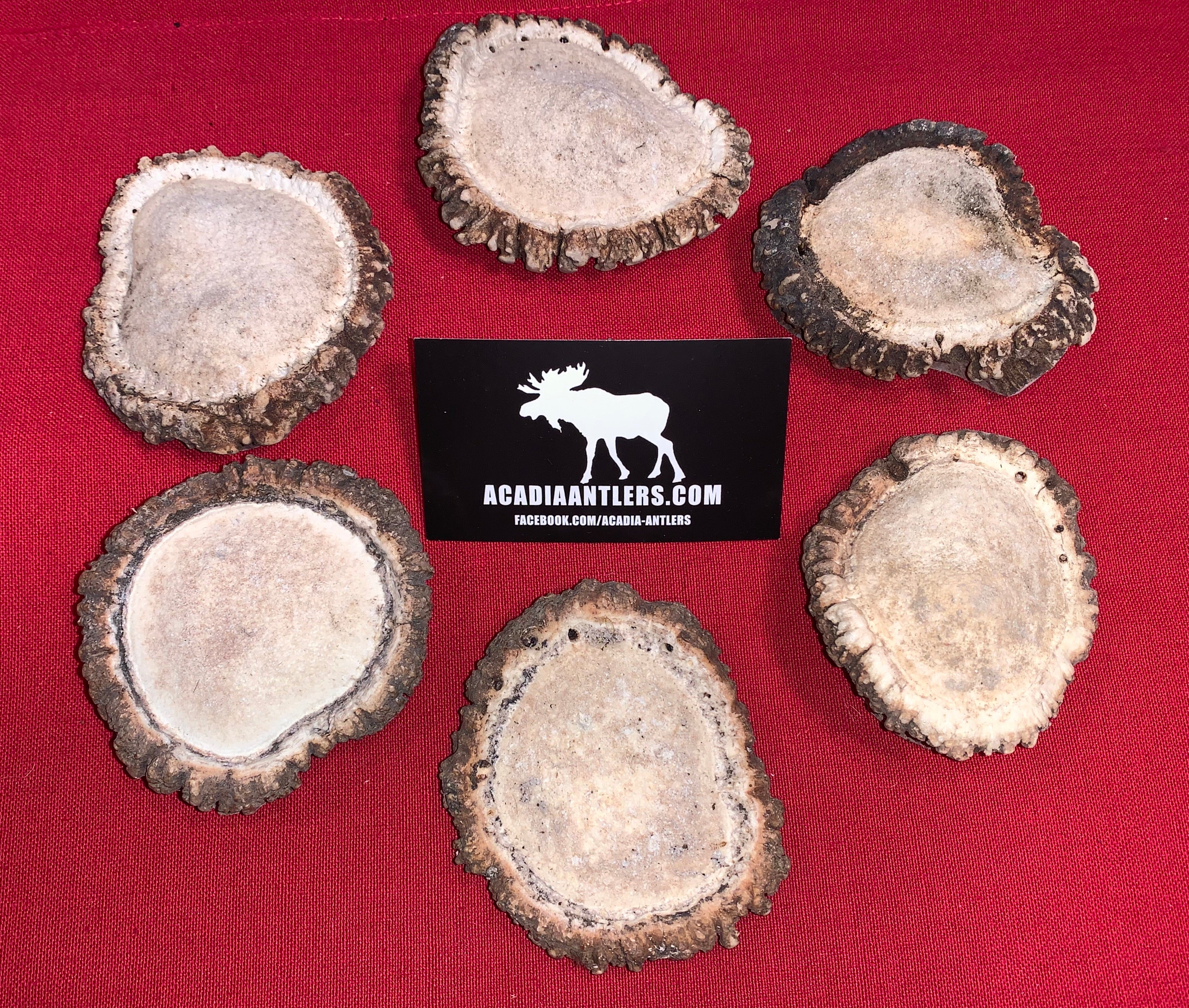 DEAL!!  Buy 5 Get 1 FREE Original or Flavored Antler Burrs $50 limited time only
