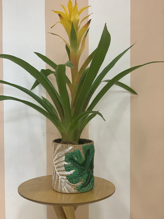 Green Leaf Abaca Planter