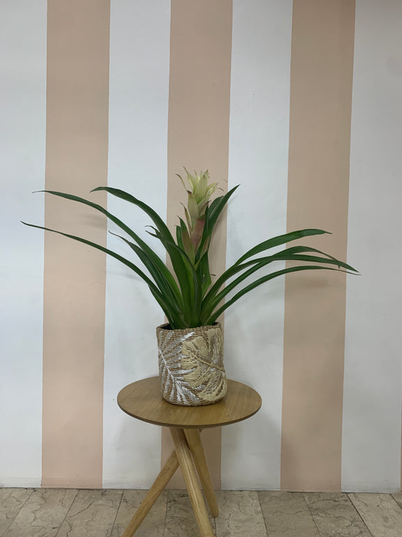 Natural Leaf Abaca Planter without Plant
