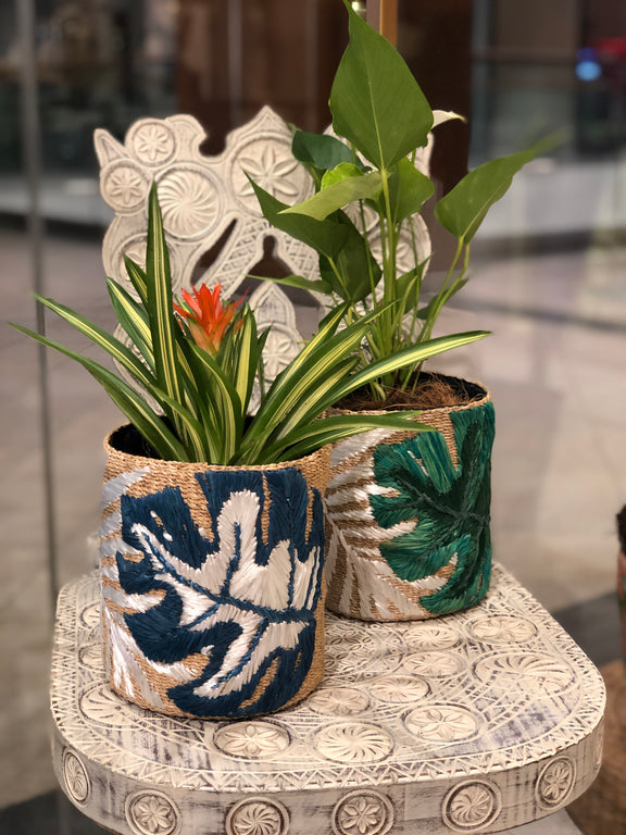 Blue Leaf Abaca Planter without Plant