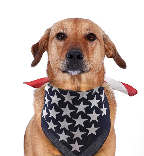 American Flag Pet Bandana For Dogs and Cats