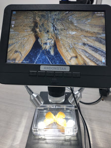 When I Put the Beautiful Butterfly Specimens Under A Digital Microscope....