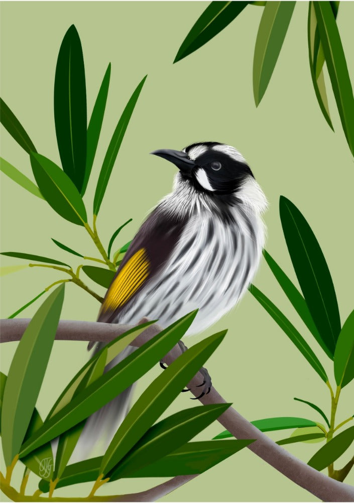 New Holland Honeyeater - Orenda Joy Green